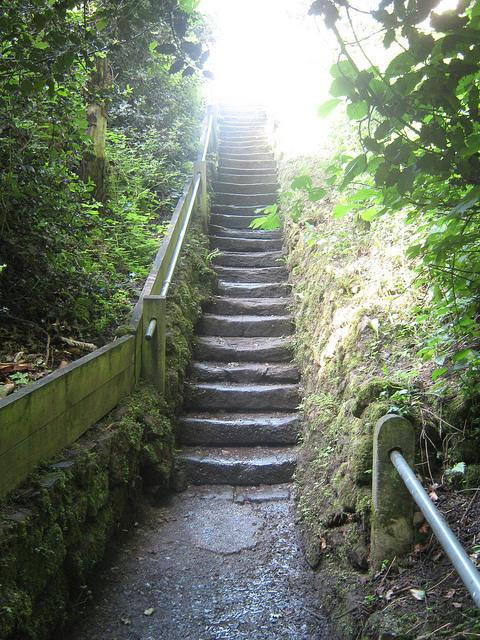 Stairway in the woods photo