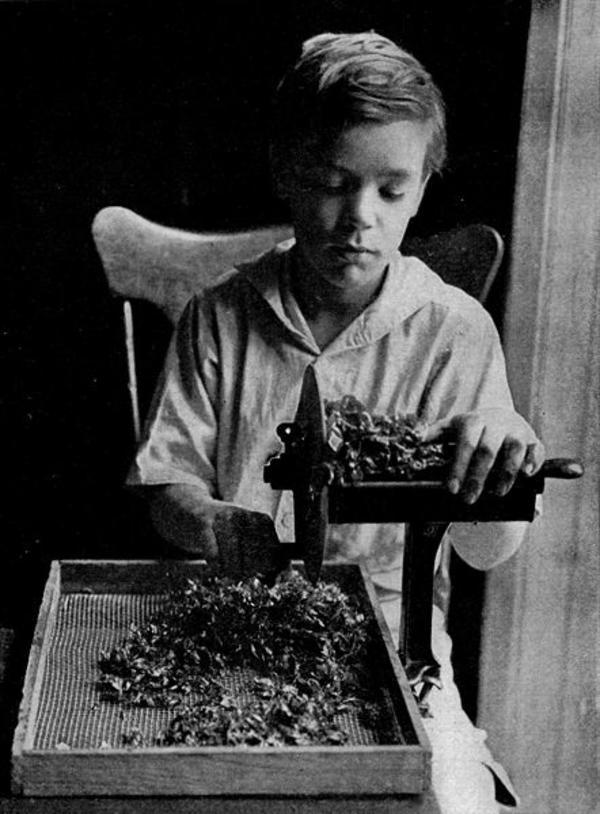 child_slicing_leaves